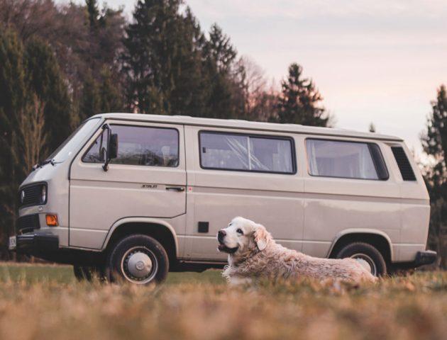 viajar-con-mascota